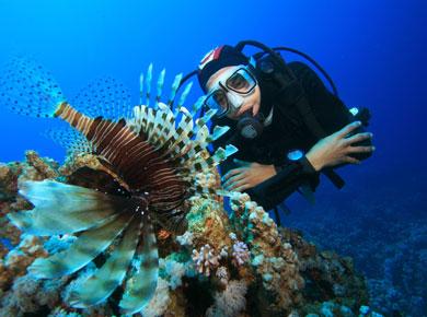 male Diver manta underwater